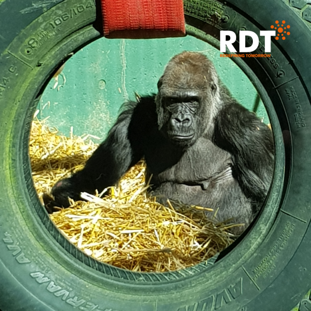 RDT employees enjoy their summer social event at Port Lympne